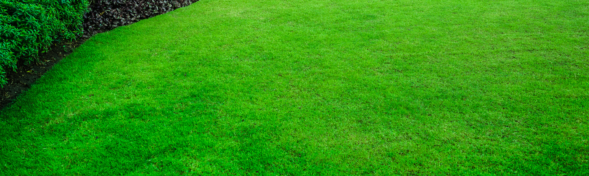 Lawn Treatment Lawn Fertilization Waxahachie Tx
